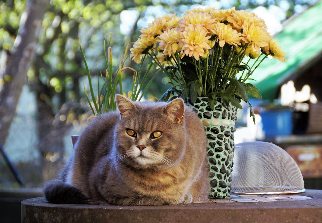 Nieznośny zapach kociego moczu nie musi nas więcej prześladować